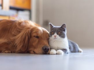 Which furry friend will make you the happiest?