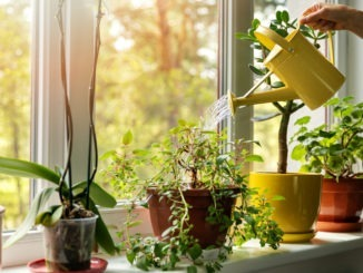 How houseplants can make your home happier
